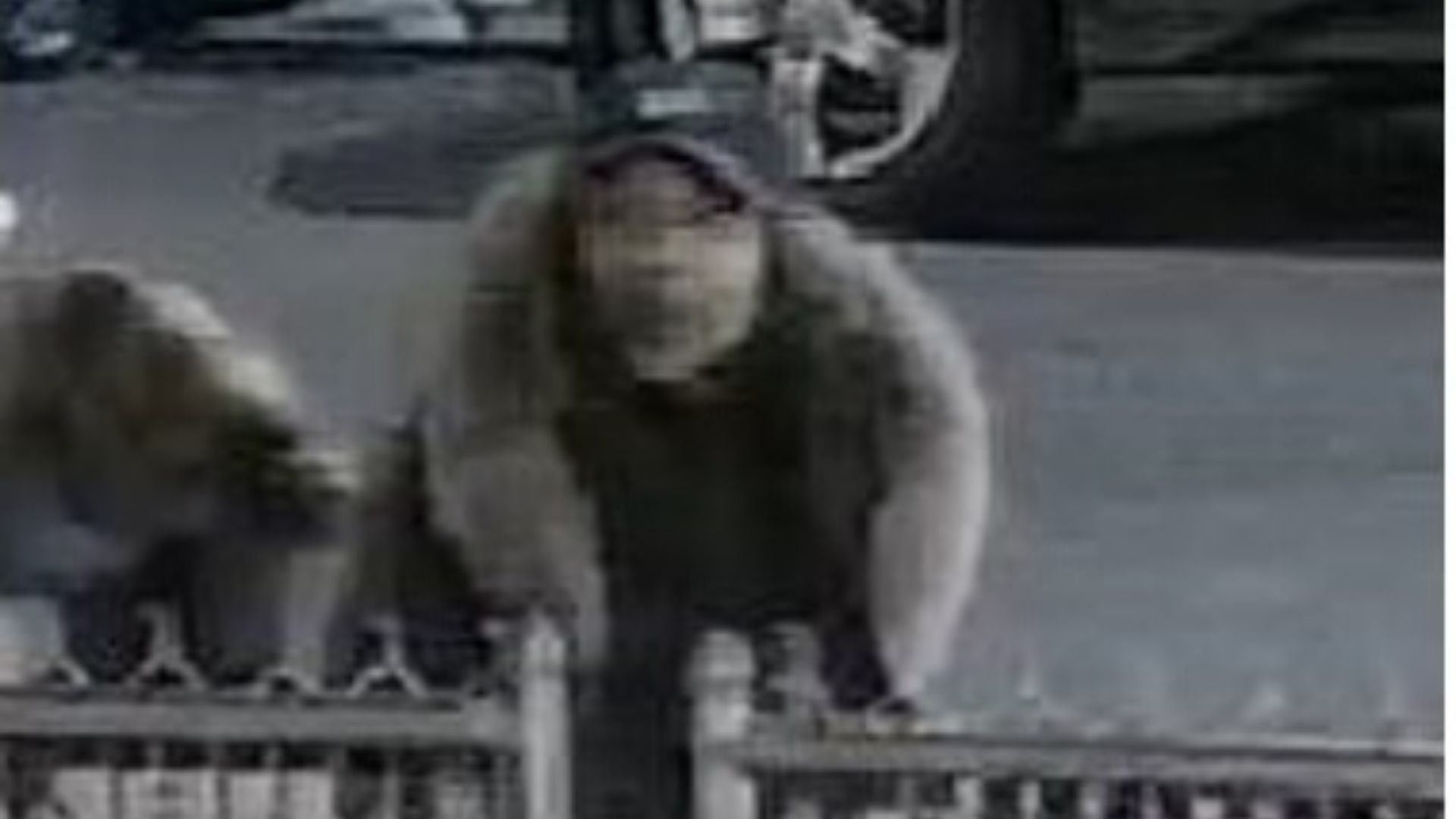Woman slashes mom's face after child throws up on bus in Brooklyn