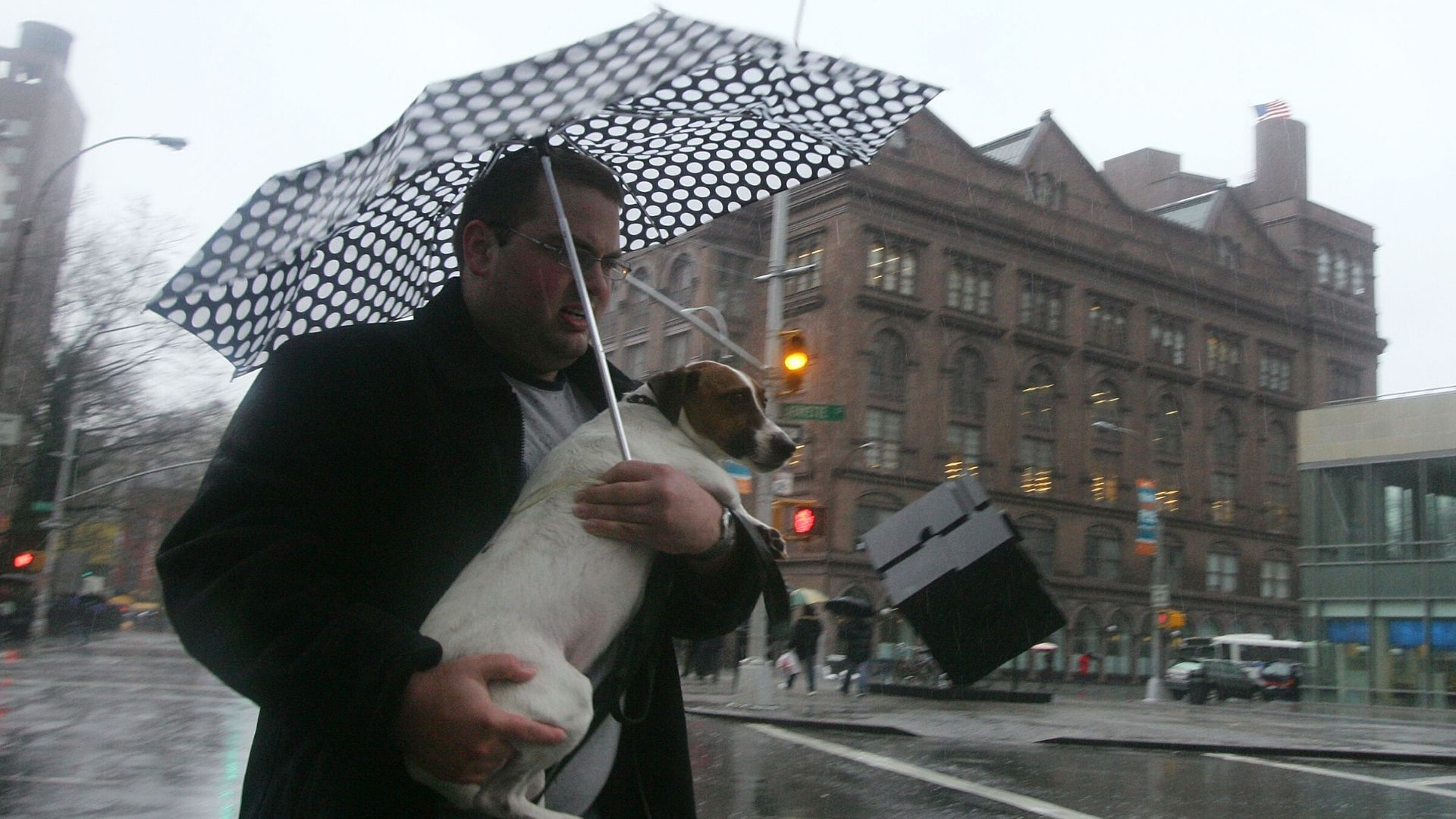 Dog in the rain under umbrella