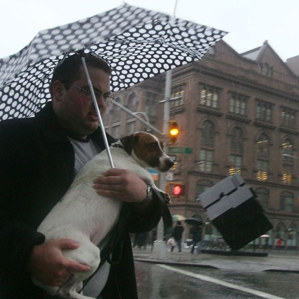 Dog in the rain under umbrella