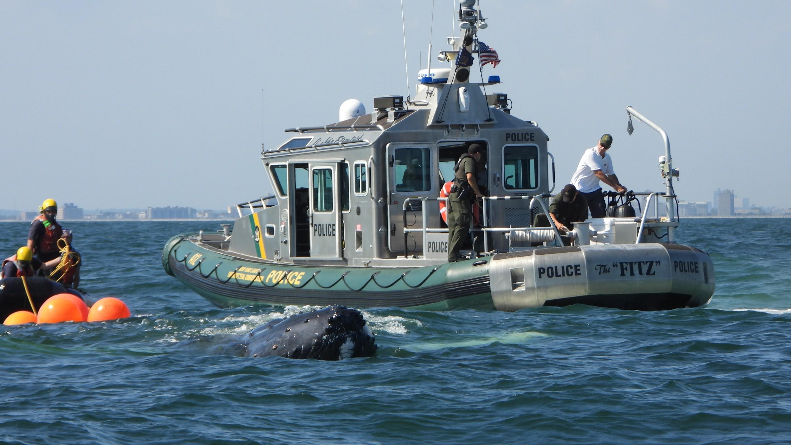 DEC Whale 12.JPG