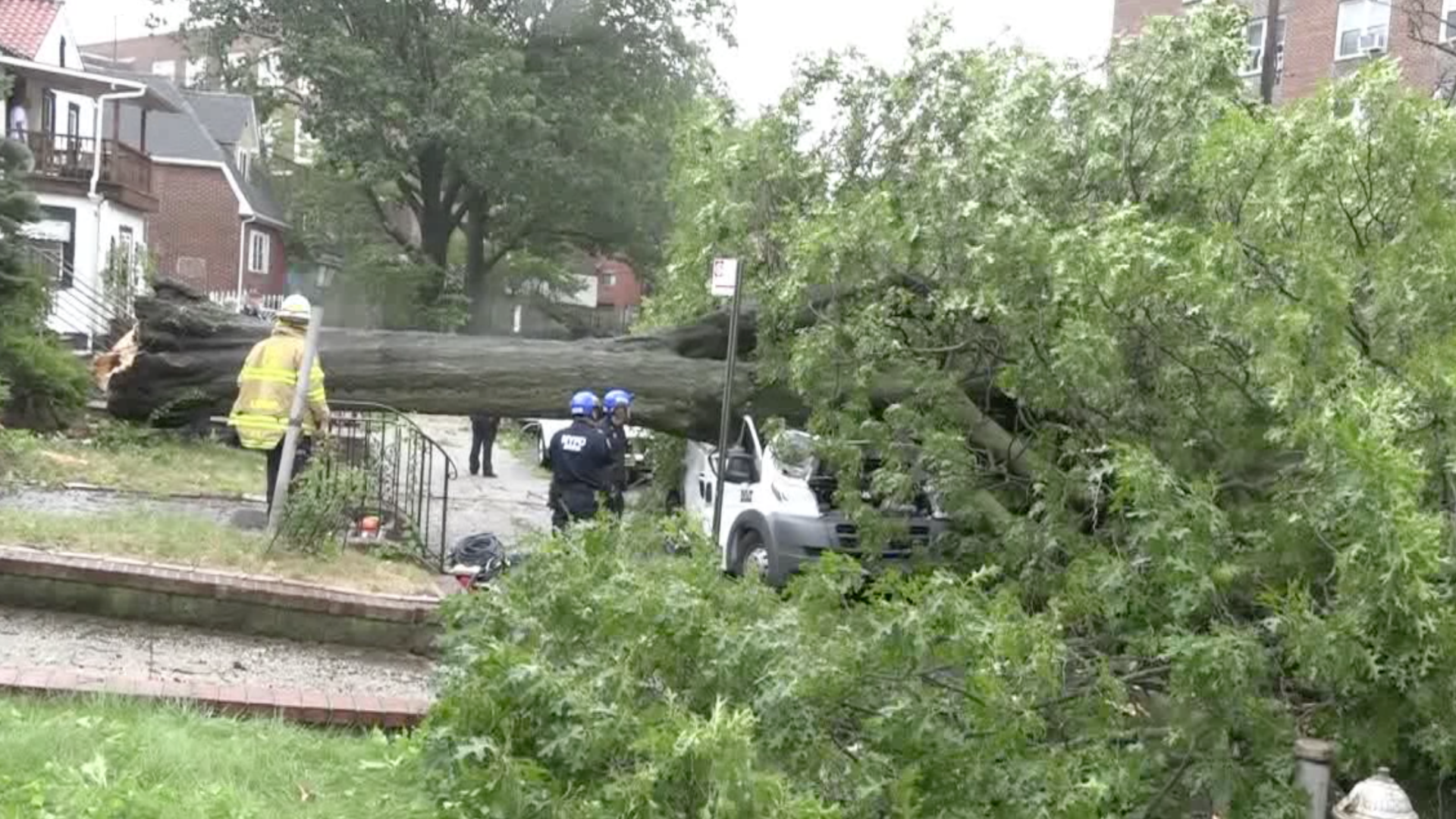 Tree down on vehicle in Queens