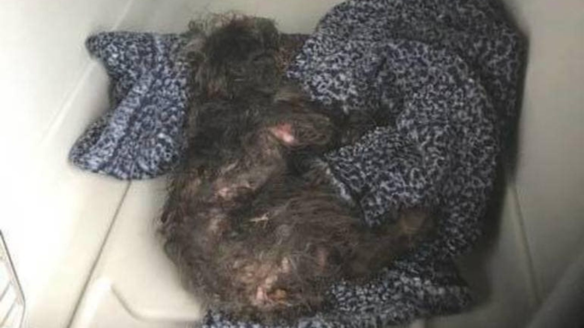 Dog named Bear thrown from car window in New Jersey