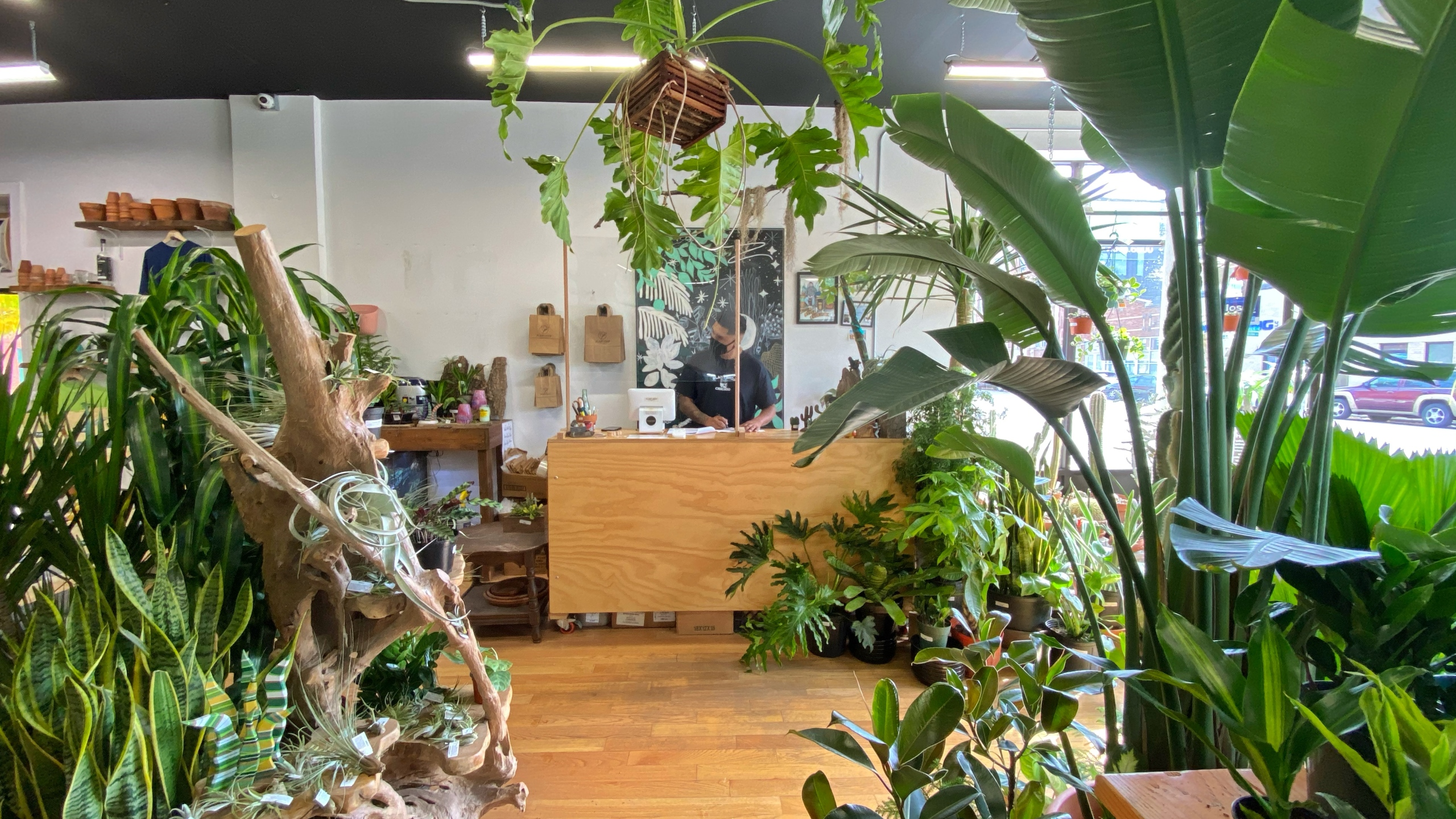 Business thrives as people turn to plants for comfort and stability during pandemic