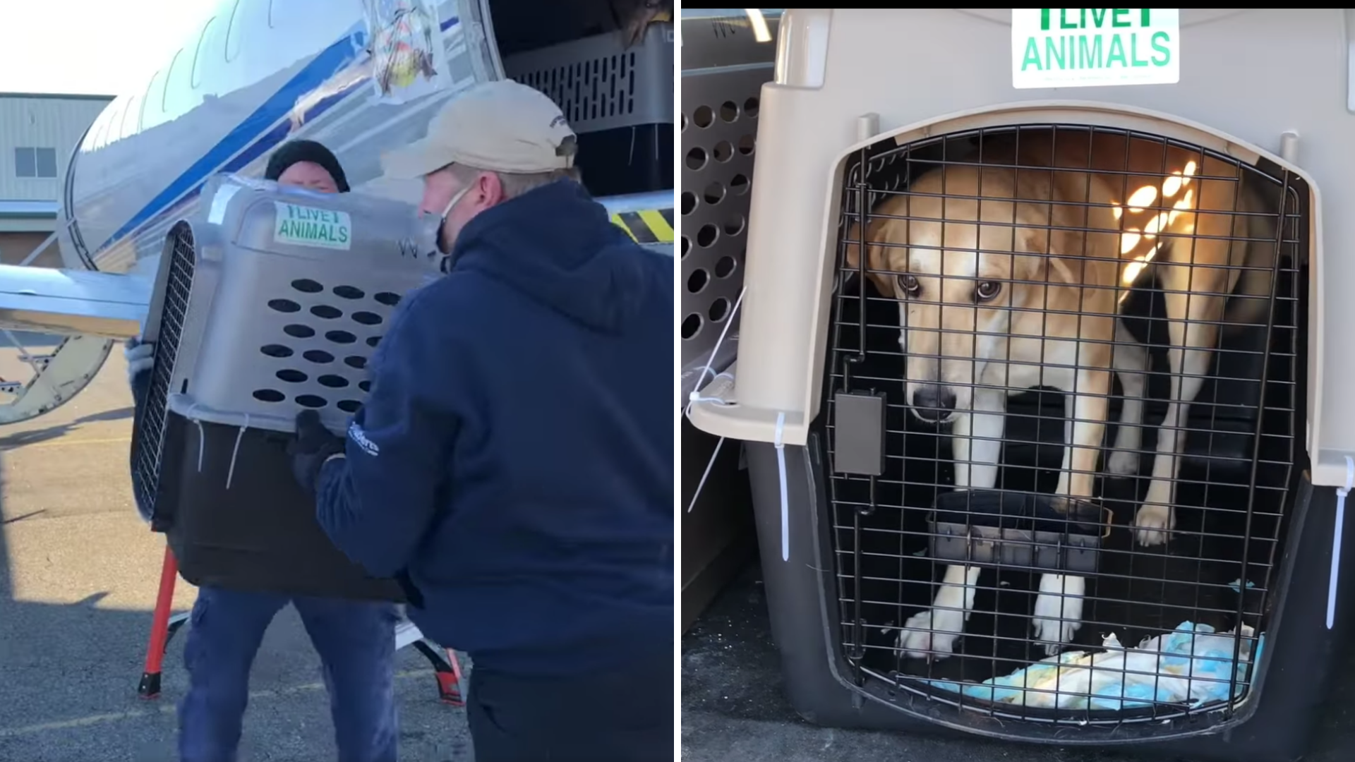 Dogs and Cats Fly From Texas to NJ