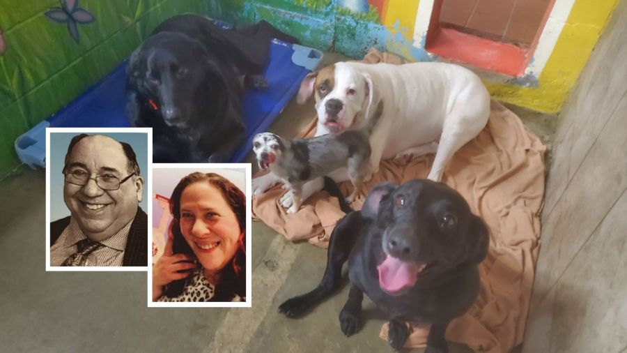 Long Island dogs need new home