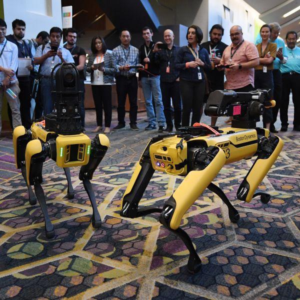 boston dynamics robot dog spot