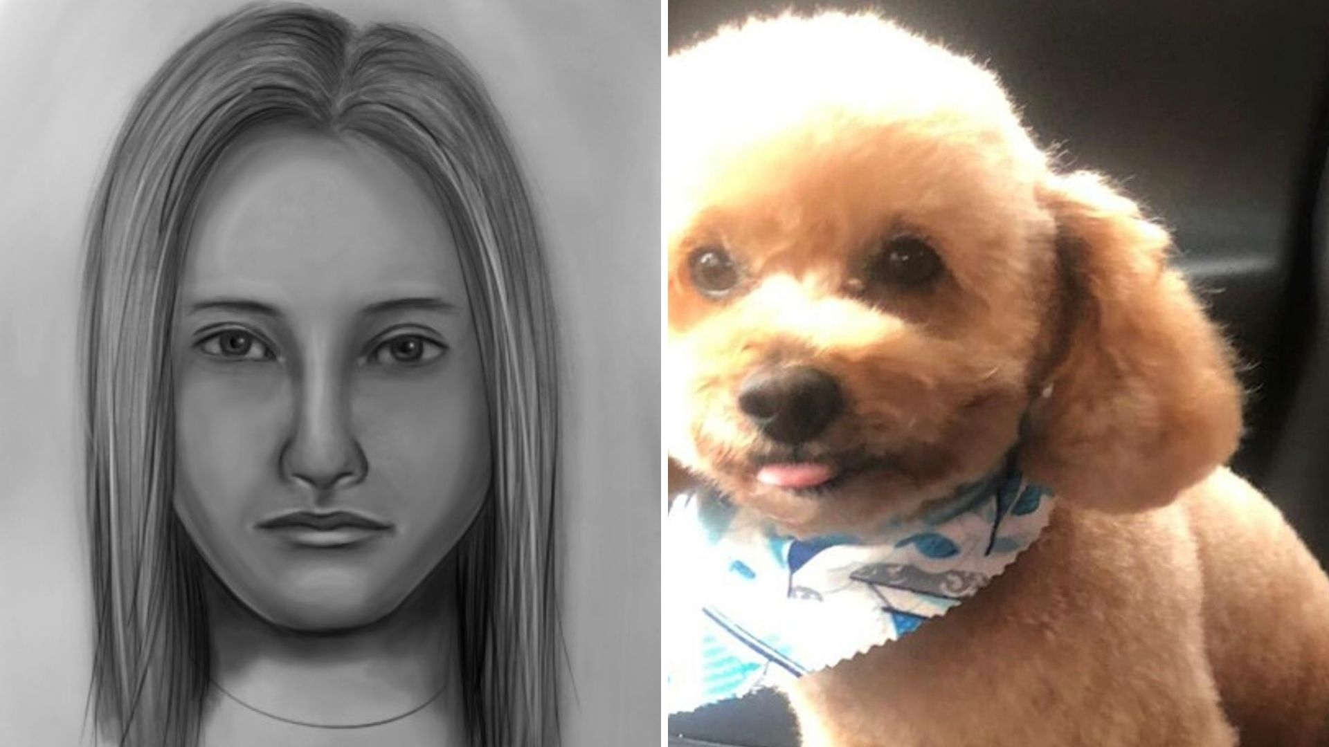 Woman accused of hitting and killing a dog with her SUV on Long Island