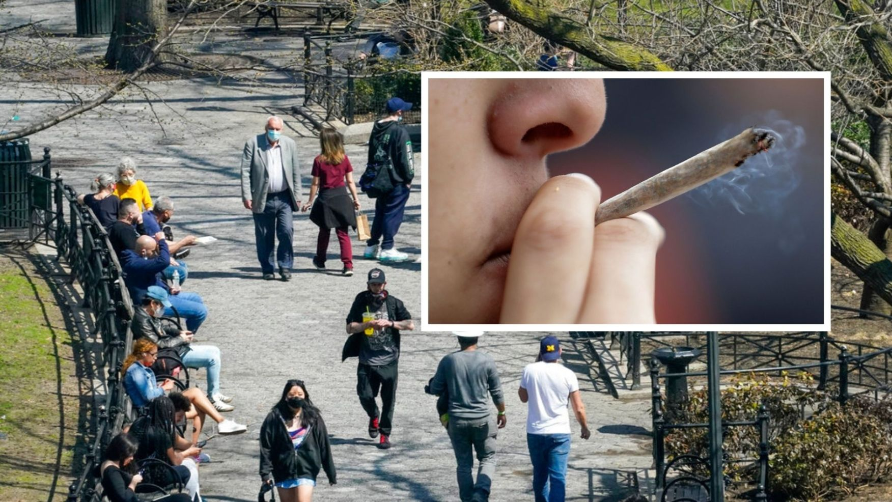 Free marijuana to vaccinated in NYC