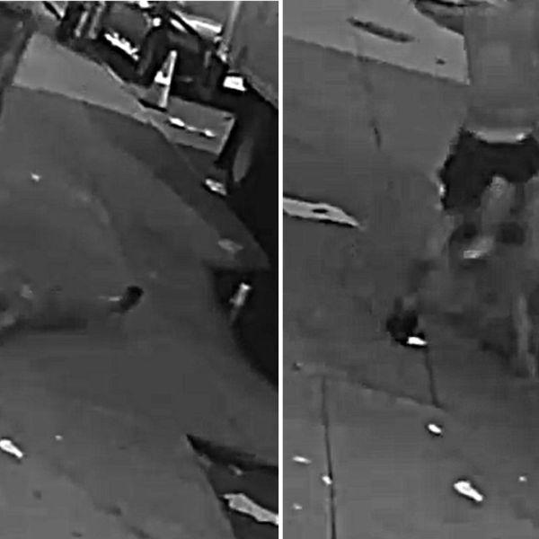 Surveillance images of a brutal Bronx attack