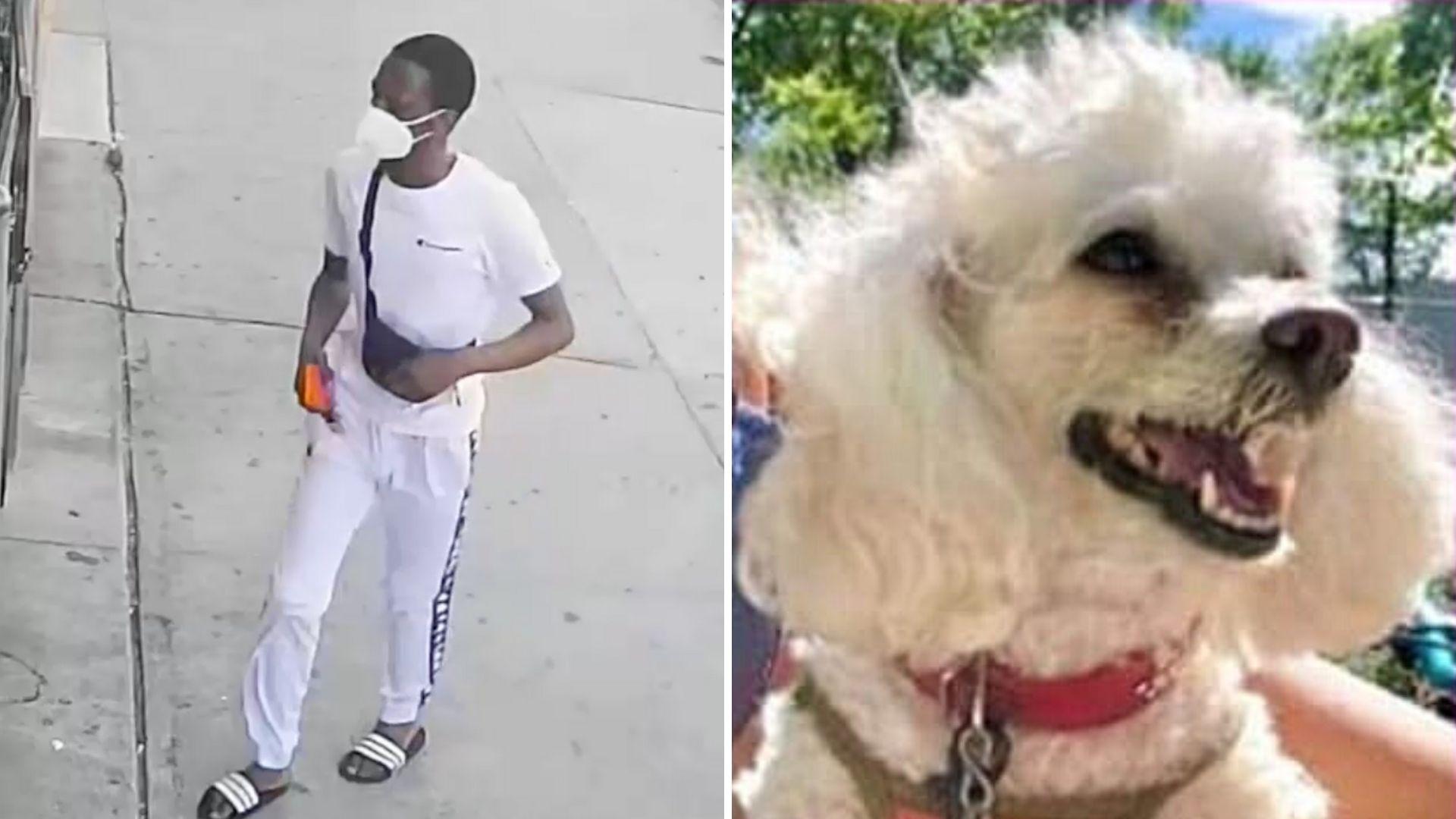 Brooklyn carjacking suspect; dog stolen