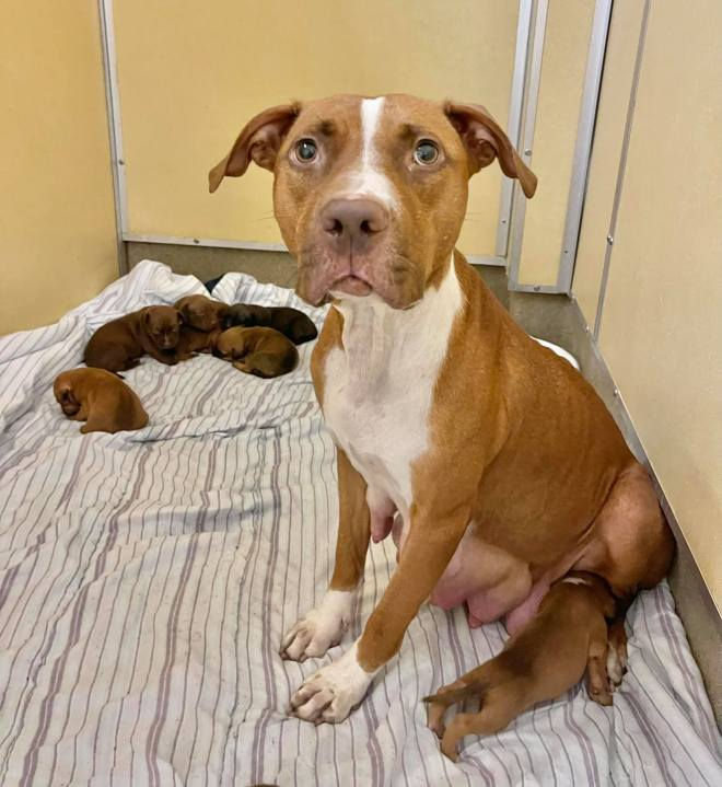 Mom dog and puppies rescued in Asbury Park, New Jersey