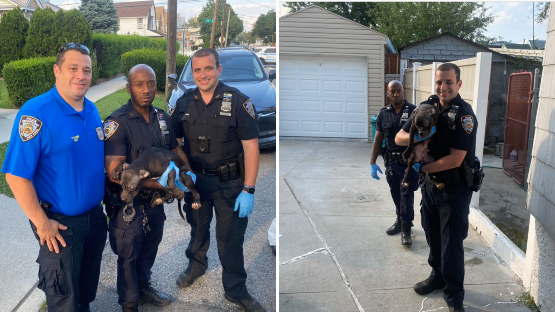 Officers hold rescued dogs in Queens