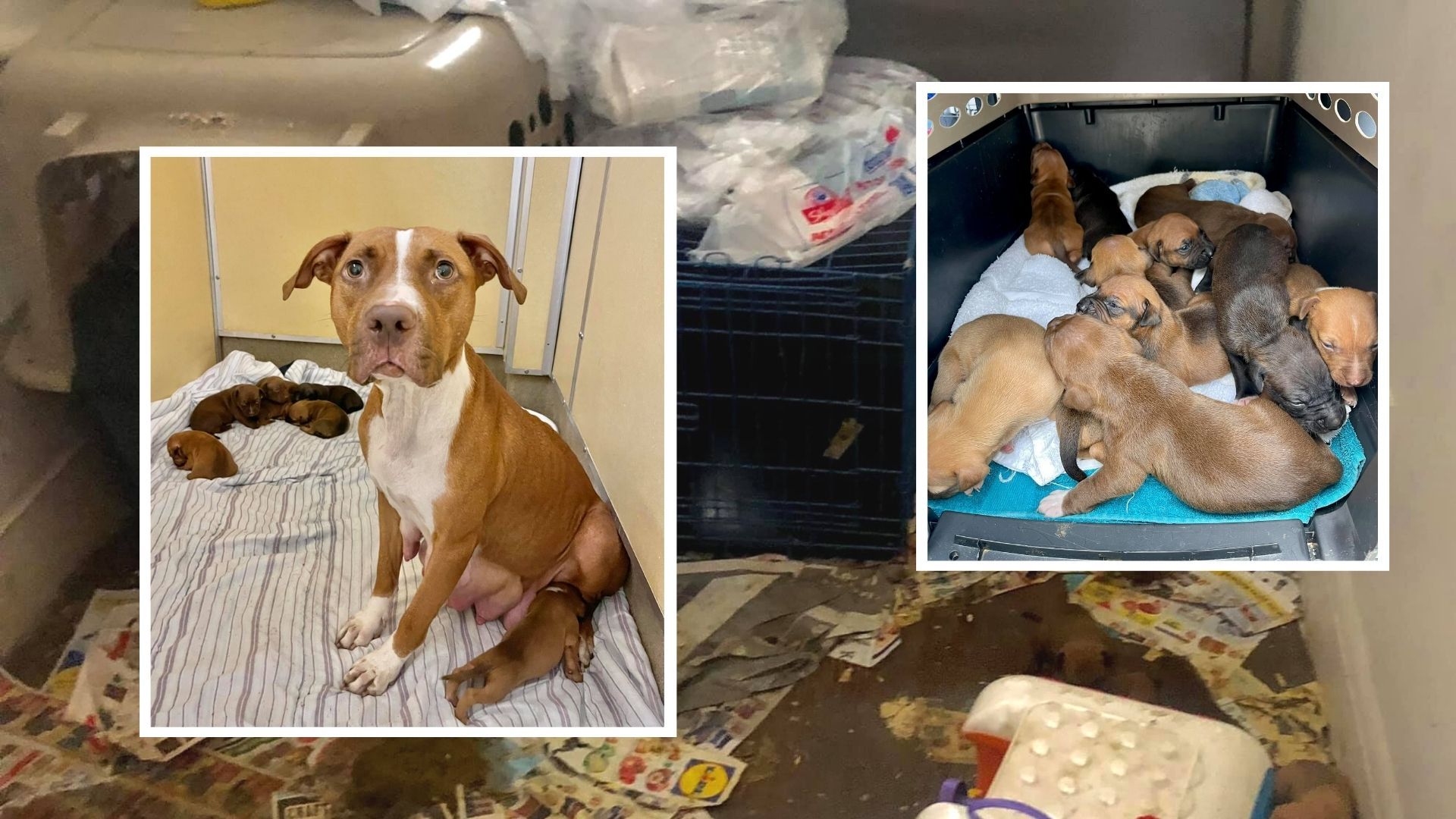 Mom and puppies rescued in Asbury Park