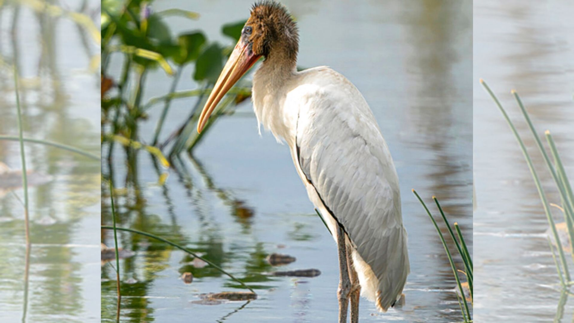 tropical stork in staten island