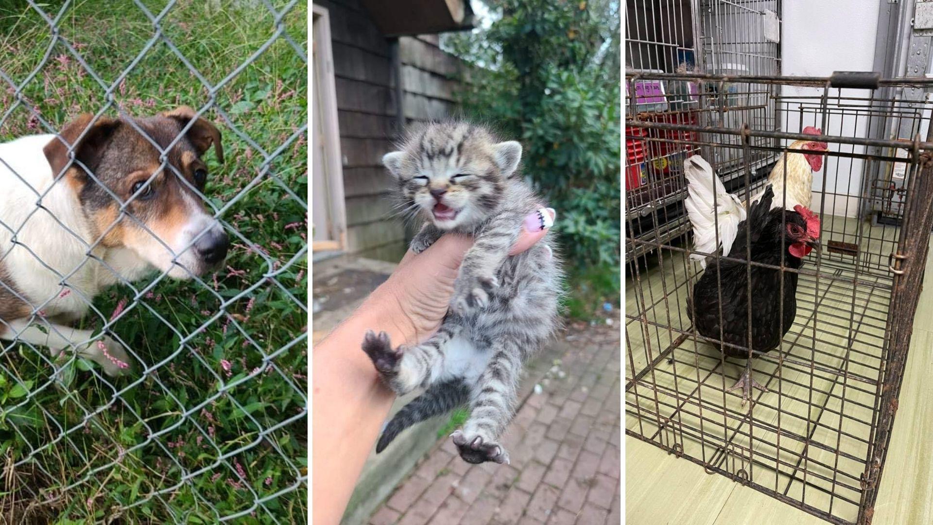 Animals rescued Blairstown, NJ